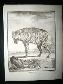 Buffon: C1770 Hyena, Antique Print